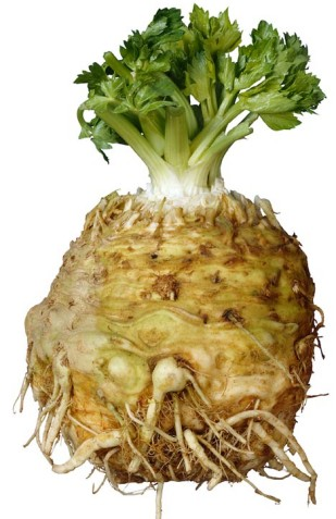 http://www.assuredproduce.co.uk/resources/000/145/545/celeriac_main.jpg